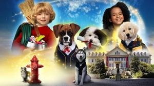 Академия щенков