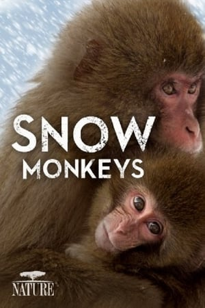 Image Snow Monkeys