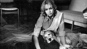 Белый Бим Черное ухо (1977) смотреть онлайн