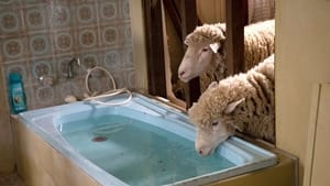 Captura de Rams (2020)