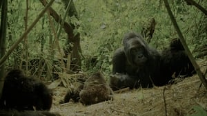 English movie from 2015: Wild Africa