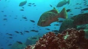 Az óceán ragadozói