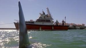 Shark Attack – The Killer Is Back (2001)