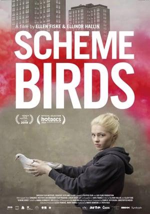 Scheme Birds (2019)