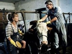 Image Alarm für eine Kuh