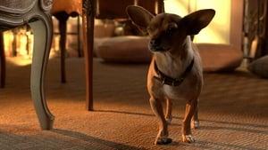 Beverly Hills Chihuahua 3 – Viva La Fiesta! [2012]