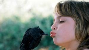 Little Bird streaming vf