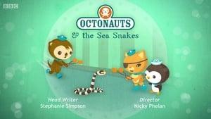 The Octonauts: 2×5