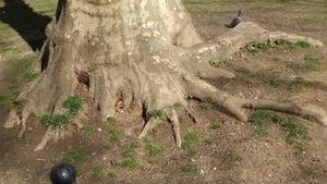Roots of Manhattan