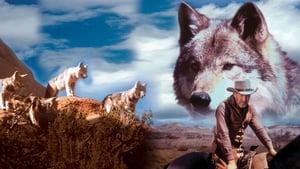 Lobo, a farkas
