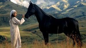 Young Black Stallion (2003) film online