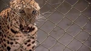 72 Dangerous Animals: Asia Season 1 Episode 1