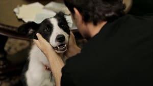Angel Dog (2011)