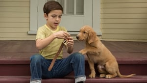 Ver A dog's purpose (2017) pelicula online latino