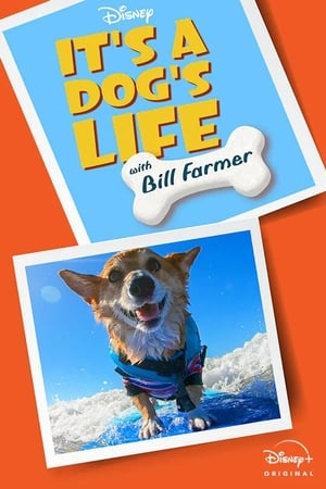 Image It's A Dog's Life with Bill Farmer