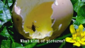 What Kind of Pictures?