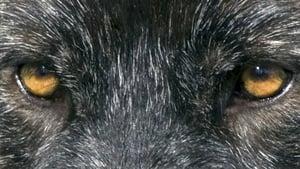 ผจญภัยสุดขอบฟ้า หมาป่าเพื่อนรัก Loup (2009)