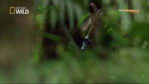 مشاهدة فيلم Dino Bird مترجم