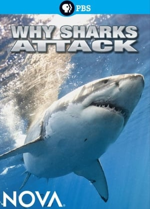 Why Sharks Attack (2014)