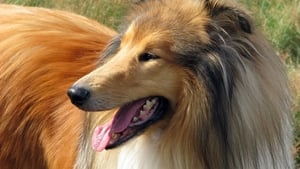 Dogs That Changed The World: Dogs by Design