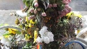 Flowers and Bike