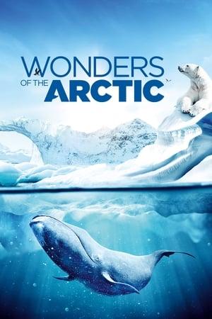 Wonders of the Arctic 3D