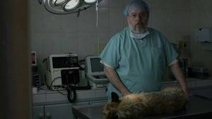 La muerte de un perro (2019)