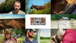 Incredible Reunions Pets and their Owners (2021)