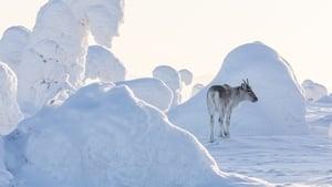 cattura di Ailo – Un'avventura tra i ghiacci