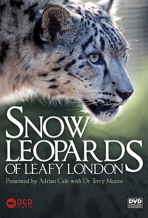 Image Snow Leopards of Leafy London