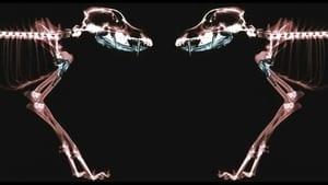 Rottweiler (2004)