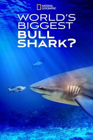 World's Biggest Bull Shark? 2021