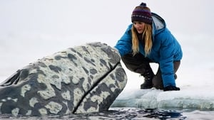 Watch Big Miracle Full Movie Online