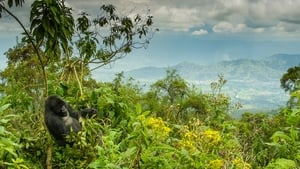 Dian Fossey: Secrets in the Mist picture