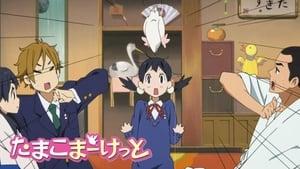 Tamako Market: Season 1 Episode 1
