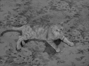 Miss Paisley's Cat