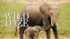 Elephant DaZe