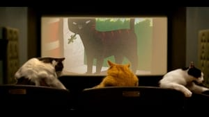 Quarantine Cat Film Fest