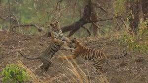 Tiger Queen of Taru (2021)