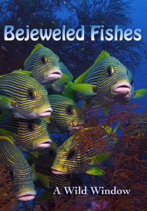 Wild Window: Bejeweled Fishes