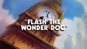 Flash the Wonder Dog