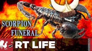 Scorpion Funeral
