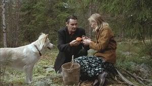 Człowiek bez przeszłości (2002) film online