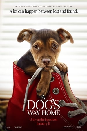 A Dog's Way Home 2019 online subtitrat gratis