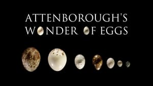 Attenborough's Wonder of Eggs