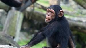 Inside Taronga Zoo