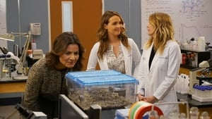 Grey's Anatomy: 14×14
