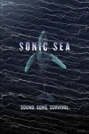 Sonic Sea(2016)