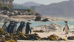 Assistir Cidade dos Pinguins: 1 Temporada Episódio 8