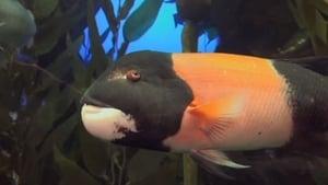 The Aquarium Season 02 Episode 07 S02E07